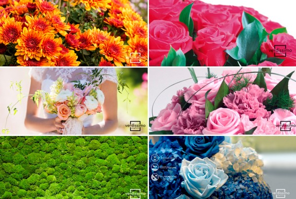 Where to buy preserved flowers?